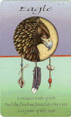 Eagle card from pocket-sized 44-animal Medicine Cards deck